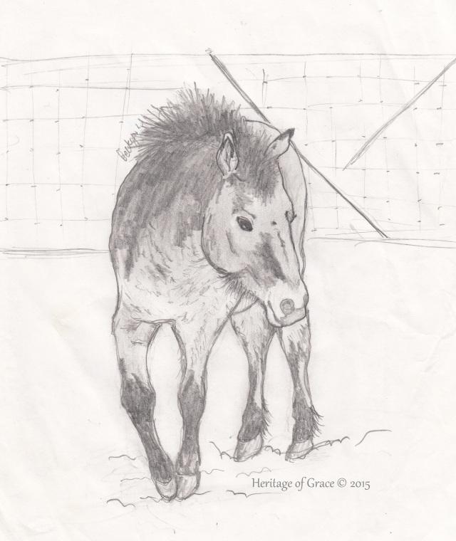 pony sketch