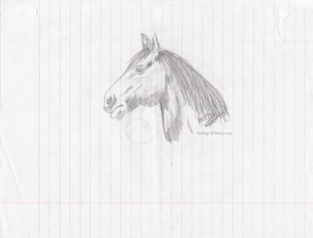 horse bust drawing
